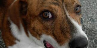 Παραδειγματική τιμωρία σε 47χρονο που σκότωσε τον σκύλο του