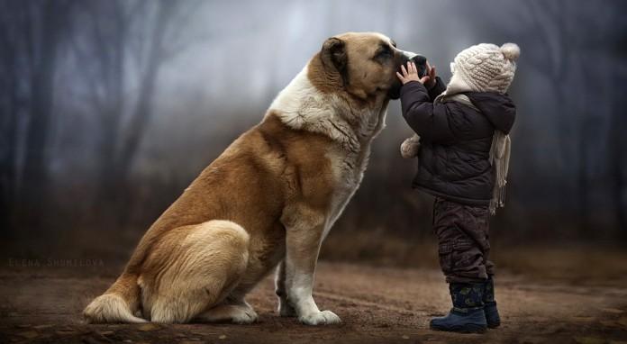 ΝΟΡΒΗΓΙΑ: Μυστηριώδης ασθένεια πλήττει δεκάδες σκυλιά