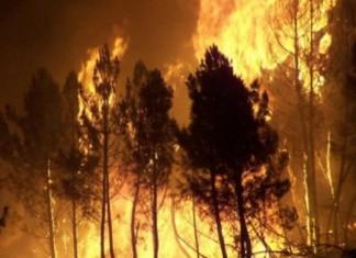 Ηλεία, φωτιά, δασική έκταση,