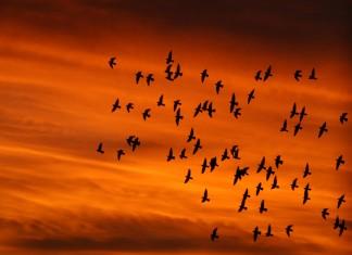 100 χιλιάδες, πουλιά, ξεχειμωνιάζουν, Ελλάδα,