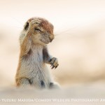 HIGHLY COMMENDED Comedy Wildlife Photography Awards