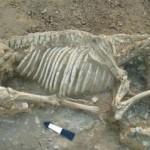άλογο σκελετός