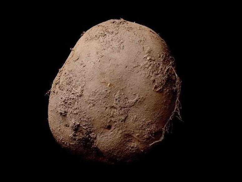 πατάτες, Σκωτσέζοι,