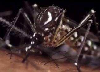 ΚΕΕΛΠΝΟ: Στους 21 οι νεκροί από τον ιό του Δυτικού Νείλου