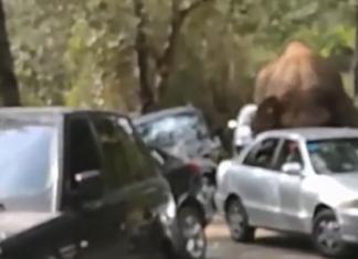 ΣΟΚ παθαίνει οδηγός λεωφορείου όταν δέχεται επίθεση από έναν ελέφαντα