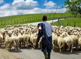 Λέσβος: Ευλογιά στα αιγοπρόβατα του νησιού
