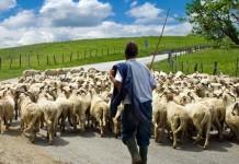 επενδύσεις, γεωργία, κτηνοτροφία,