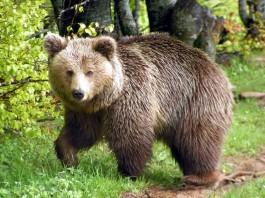 Θεσσαλονίκη: Δύο αρκούδες νεκρές
