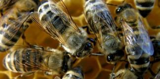 Γρεβενά: Στρατιωτικός πέθανε από τσίμπημα μέλισσας