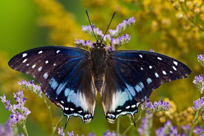 μέση ταχύτητα, πεταλούδα,
