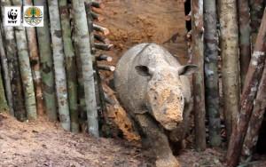 ρινοκερος