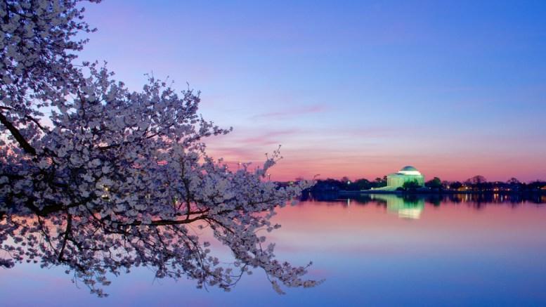 κερασιές,Ουάσιγκτον,