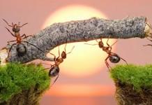 μυρμήγκια,άνθρωποι,