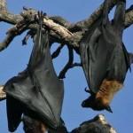 νυχτερίδες, σπηλιά,