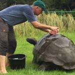 γηραιότερη, χελώνα, 184 ετών,