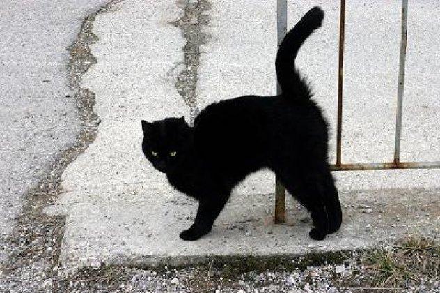 γάτες, γευτούν, ζάχαρη,