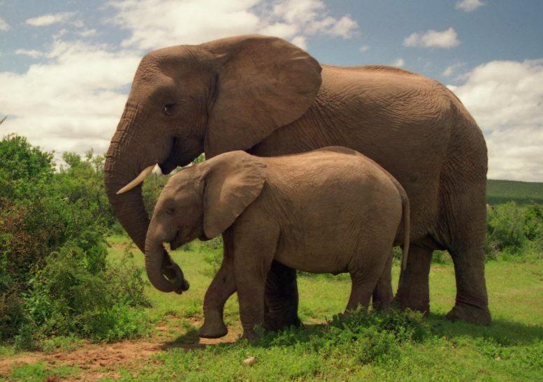 ελέφαντες, πήδημα,