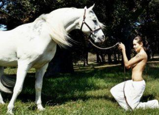 άλογα, επικοινωνήσουν, μέσω, συμβόλων