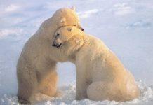 άχρηστη πληροφορία, πολικές αρκούδες, αριστερόχειρες,