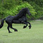 ανέκδοτο, άλογο, γάιδαρος,