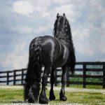 αλογο1