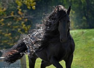 αλογο2