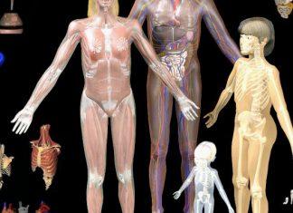 άχρηστη πληροφορία, κόκκαλα, ανθρώπινο σώμα, πόδια,