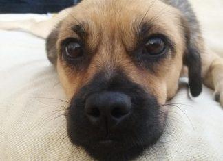 Βορίδης: Νομοθετούμε υπέρ της προστασίας των ζώων συντροφιάς
