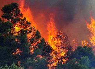 Θάσος, πυρκαγιά,