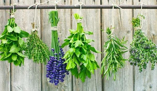 εθνικό στρατηγικό σχέδιο, αρωματικά, φαρμακευτικά φυτά,