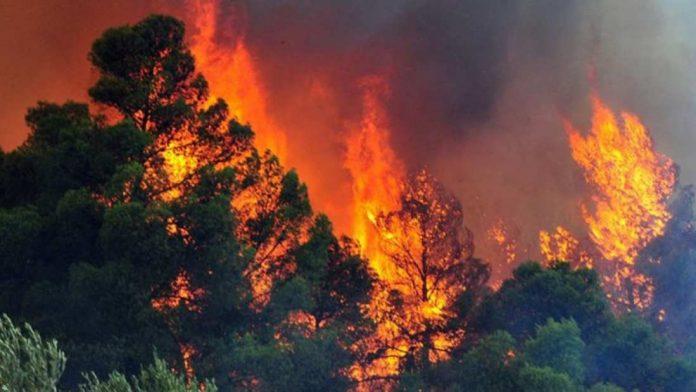 Άνδρος, πυρκαγιά, Άνω Άγιος Πέτρος,