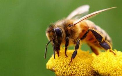 μέλισσα,τσίμπημα, 5 τρόποι