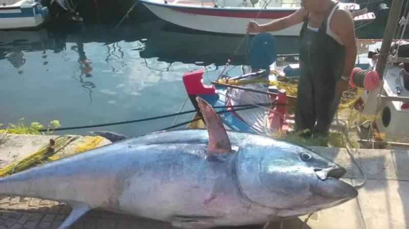 ψάρι, 220 κιλών, Κεφαλονιά,
