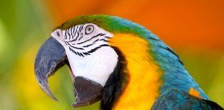 Ο παπαγάλος έχει σύνθετη σκέψη