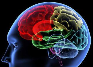 μπαχαρικό, Εγκέφαλος,