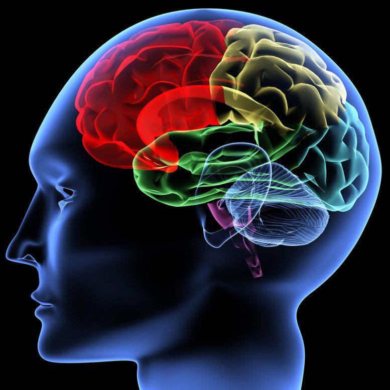 βιάγκρα, εγκεφάλου,