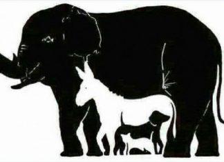κουίζ, ζώα, φωτογραφία,