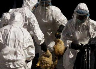 μέτρα, βιοασφάλειας, γρίπη πτηνών,