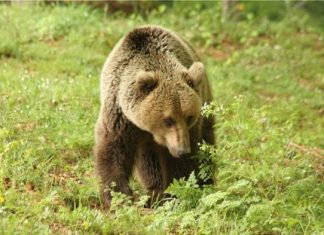 άνοιξη, αρκούδες, Νυμφαίο,
