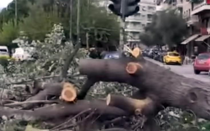 δέντρο, Ευελπίδων, ρεύμα, κυκλοφορίας,