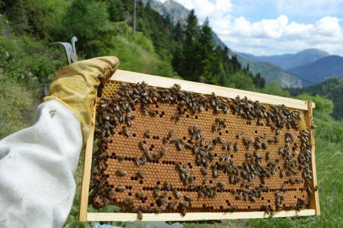 ΓΕΡΜΑΝΙΑ: Η μέλισσα έχει γίνει ένα από τα πιο δημοφιλή κατοικίδια