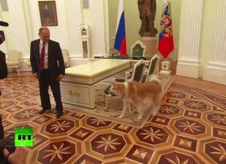 σκύλος, Πούτιν, έκλεψε παράσταση,