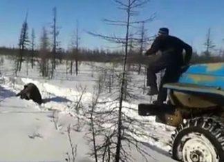 Ρωσία, κυνήγησαν, πάτησαν, αρκούδα,