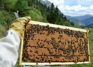 άχρηστη πληροφορία, είδη μέλισσας, μέλι,