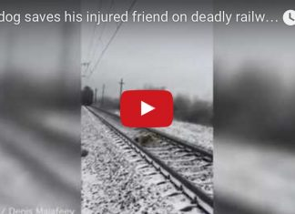 σκύλος, ράγες, τρένο,