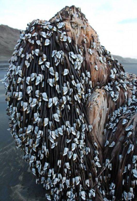 αντικείμενο, ακτή, Νέας Ζηλανδίας,