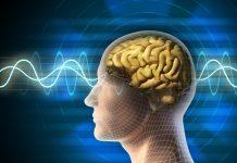 24 πληροφορίες για τον ανθρώπινο εγκέφαλο
