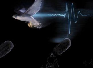 ήχος, πουλιά, πετούν,
