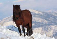 άγρια άλογα, βουνά, Πρέβεζα,