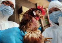 Κοζάνη, γρίπη πτηνών,